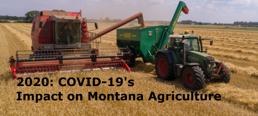 """Agricultural Economics Virtual Outlook Conference """"2020  2020: COVID-19's Impact on Montana Agriculture"""" on Nov. 13"""